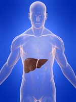 cirrhosis Home Remedies for Cirrhosis of the Liver